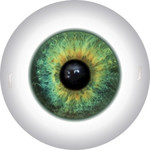 Doll Eyes 49KN