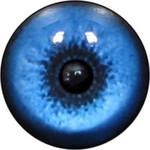 Baby Wolf Eyes 1 (No White)