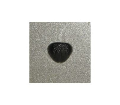 Nose 10 (20x16 mm) Black